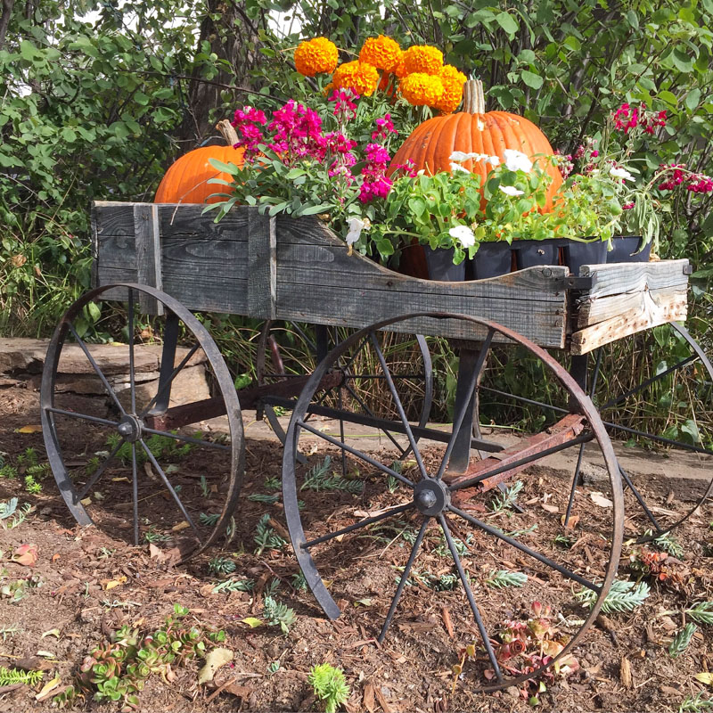 pumpkins and fall flowers in a rustic wheelbarrow - pumpkins in a wood cart - rustic vintage wheelbarrow - 1111 Light Lane (1 of 1)