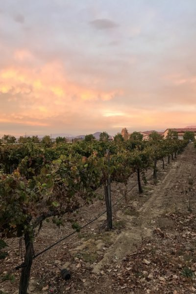 Our 10th Wedding Anniversary: Celebrating 10 years of Marriage in Temecula Valley Wine Country